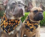 How a Cooling Bandana can help your Dog